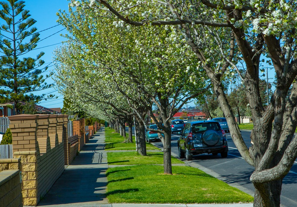 Overhanging branches on roads and footpaths